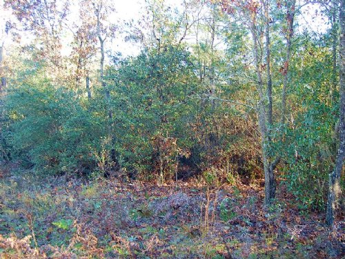 0.46 Acre Lot Near Interlachen : Interlachen : Putnam County : Florida