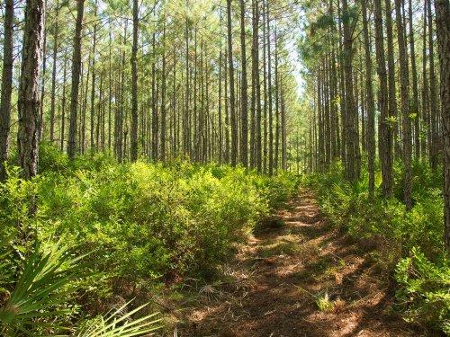 Bellamy Point - Room To Grow : Callahan : Nassau County : Florida
