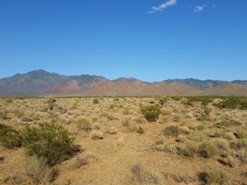 Arizona Dream Land : Dolan Springs : Mohave County : Arizona
