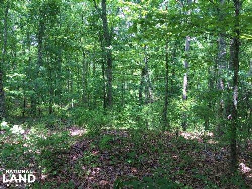 430.5+/- Acres Timberland & Deer/Tu : Waynesboro : Wayne County : Tennessee