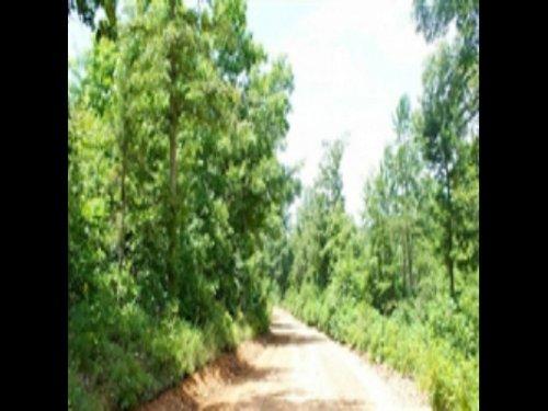 8.22 Acre Green Mountain Ranch : Winona : Shannon County : Missouri