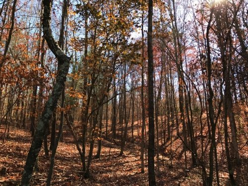 Lot 2, 5.016 +/- Acres : Fairmount : Bartow County : Georgia