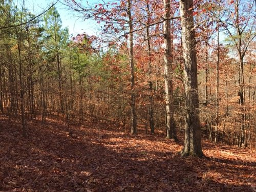Lot 4, 5.002 +/- Acres : Fairmount : Bartow County : Georgia