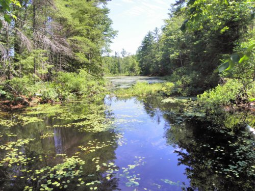Pease Brook Forest : Cornish : York County : Maine