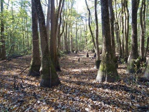 182 Ml Ac On Bayou Deview : Hunter : Woodruff County : Arkansas