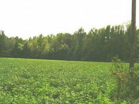 325 Acres Row Crop & Timber : Talladega : Talladega County : Alabama
