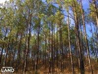 Lapine Investment Tract : Lapine : Montgomery County : Alabama