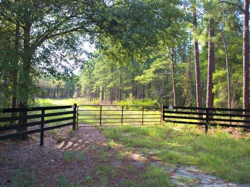 Oak Creek Lot 7 : Starke : Bradford County : Florida