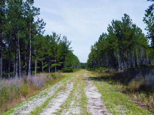 Oak Creek Lot 6 : Starke : Bradford County : Florida