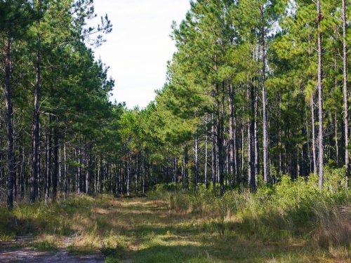 Oak Creek Lot 5 : Starke : Bradford County : Florida