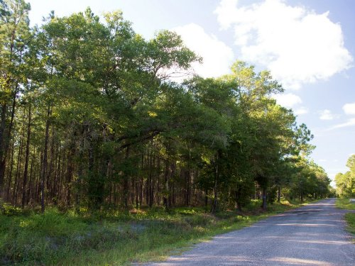 Oak Creek Lot 3 : Starke : Bradford County : Florida
