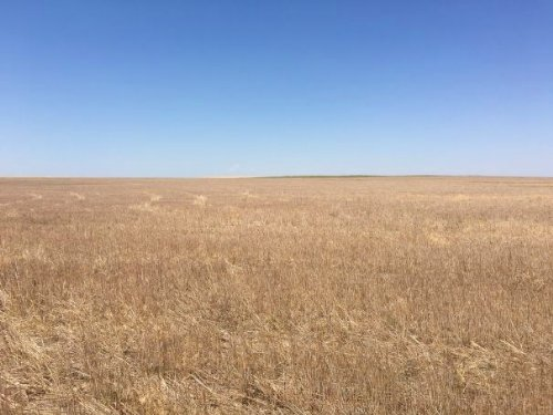 Ilene Stewart Trust Dryland : Lodgepole : Cheyenne County : Nebraska
