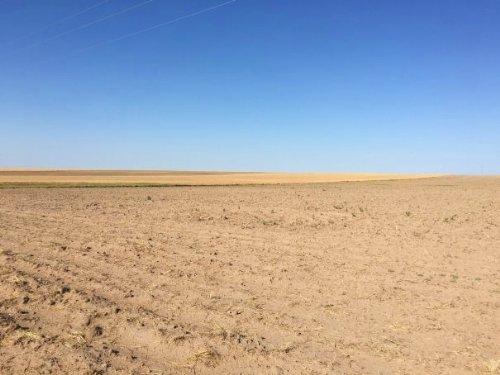 Ilene Stewart Trust : Sedgwick County : Colorado