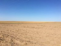 Ilene Stewart Trust : Sedgwick : Sedgwick County : Colorado