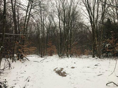 Buck Rub Woods : Altmar : Oswego County : New York