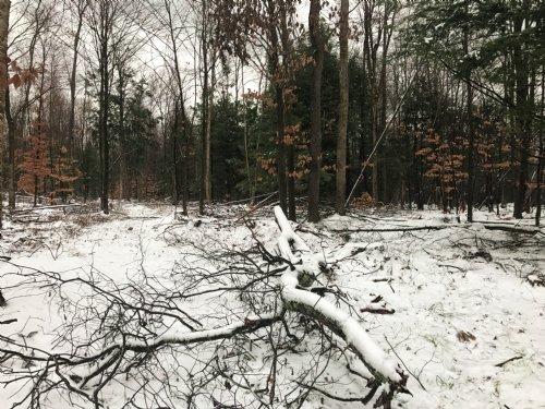 Maple Meadows : Altmar : Oswego County : New York