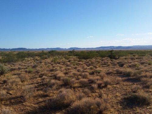 Your Paradise Land : Dolan Springs : Mohave County : Arizona