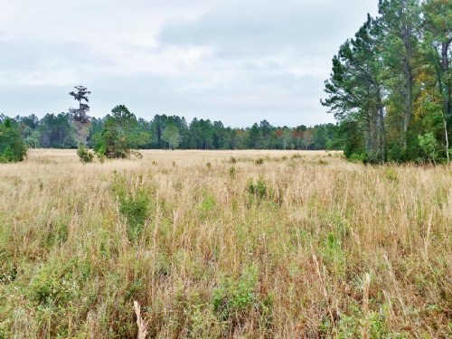 500ac Crescent City Ranch : Crescent City : Putnam County : Florida