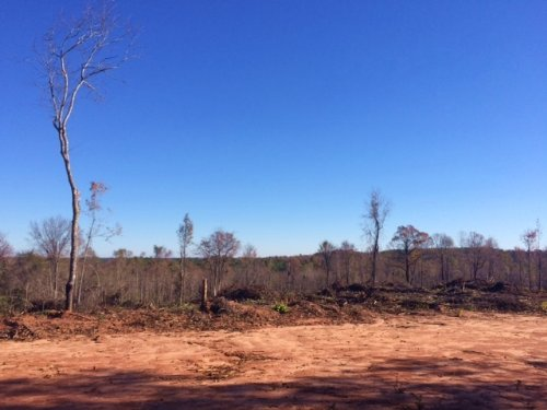 168 Acres - Hunting / Recreational : Dry Branch : Twiggs County : Georgia