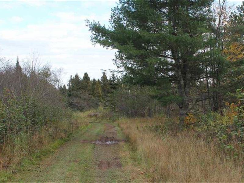 Rustic Getaway Woods Rd, 1098865 : Lanse : Baraga County : Michigan