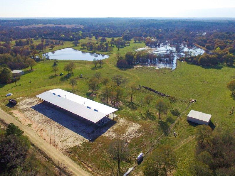 240 Acres Cr 227 : Shiro : Grimes County : Texas