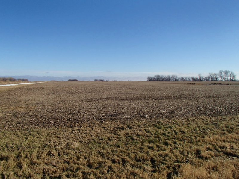 162 Acres Farm & Hunting Land : Aberdeen : Brown County : South Dakota