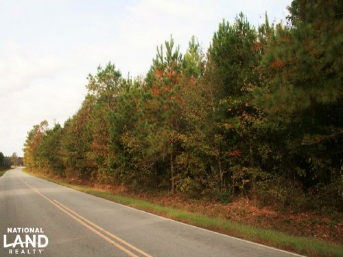 Bazemore Road Timber & Hunting Trac : Cofield : Hertford County : North Carolina