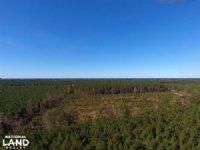 Sportsman's Property & Timber Inves : Rich Square : Northampton County : North Carolina