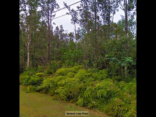 1/3 Acre Lot Near Pahoa : Pahoa : Hawaii County : Hawaii