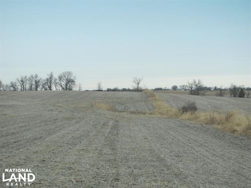Mozingo Deer And Row Crop : Conception Junction : Nodaway County : Missouri