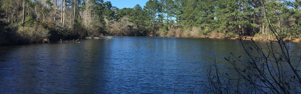 166 Ac Great Timberland Tract Near