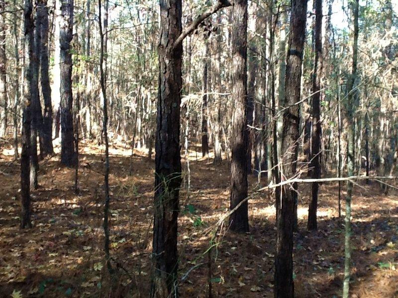 Shady Grove Rd Tract : Grady : Crenshaw County : Alabama