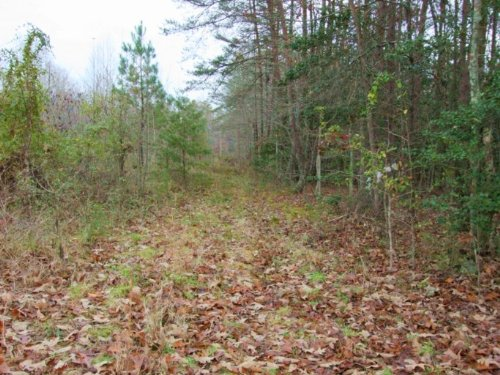 14 Acre Lot : Goochland : Virginia