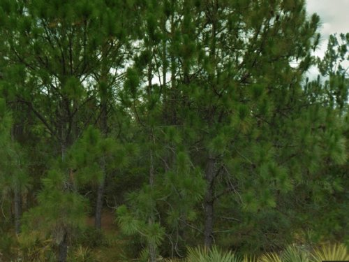 Vacant Two Lots Together : Lake Placid : Highlands County : Florida