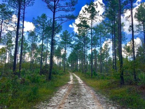 29-034 Wheelless Family Holdings : Wetumpka : Elmore County : Alabama