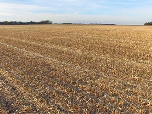 Real Estate Auction-100 Acres-3 Tra : Morocco : Newton County : Indiana