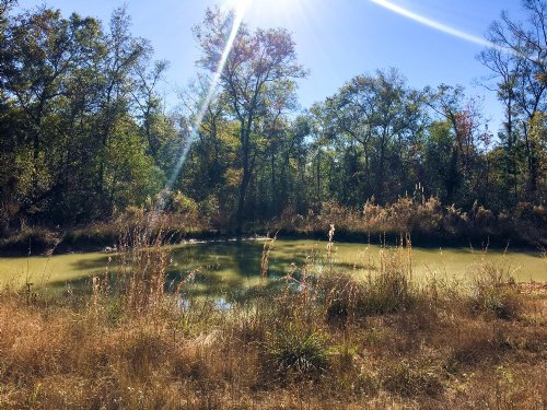181.9 Ac Southwind Trail : Cleveland : San Jacinto County : Texas