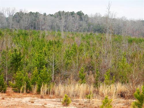 503 Acres In Coweta County Georgia : Sargent : Coweta County : Georgia