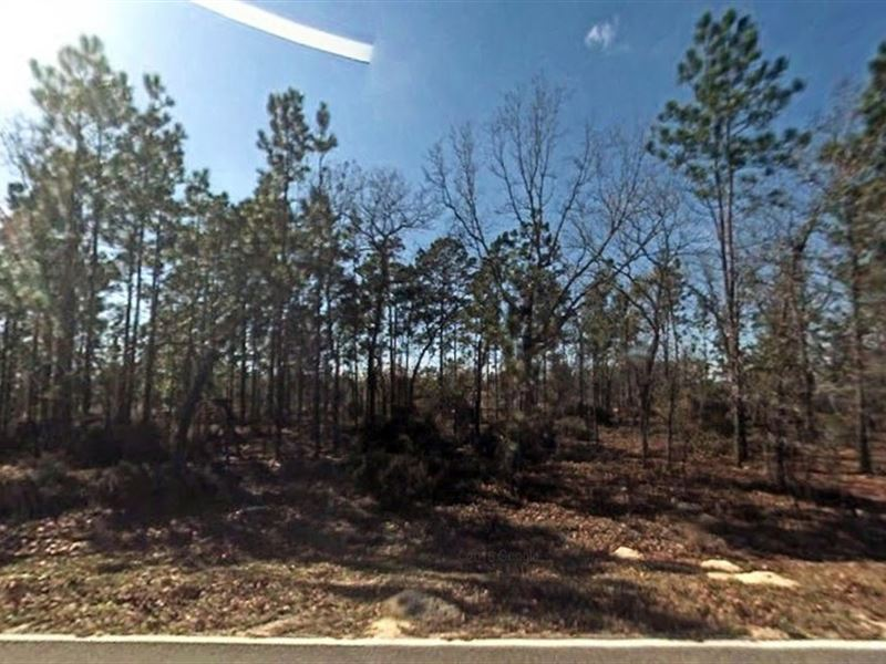 .74 Acre In Interlachen, Fl : Interlachen : Putnam County : Florida
