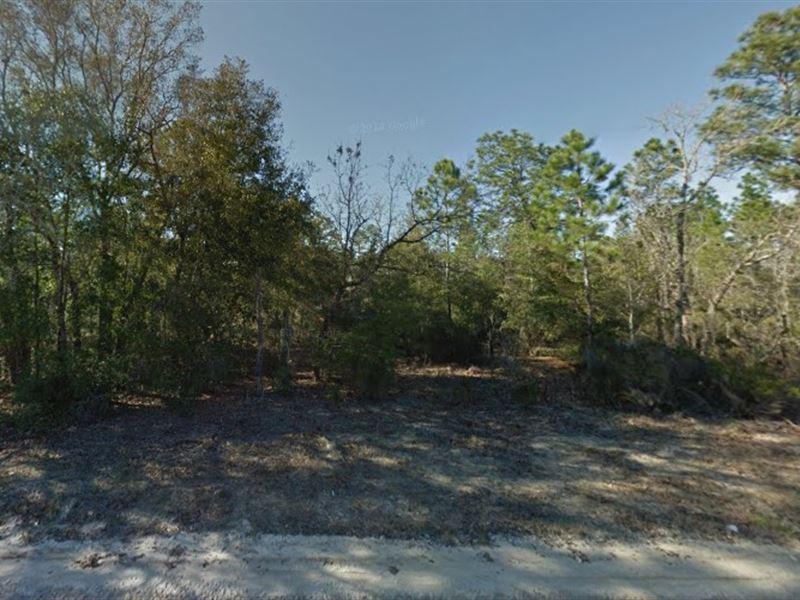 .15 Acre In Interlachen, Fl : Interlachen : Putnam County : Florida