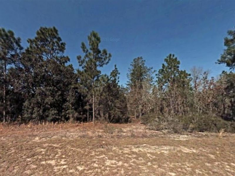 1.25 Acres In Dunnellon, Fl : Dunnellon : Marion County : Florida