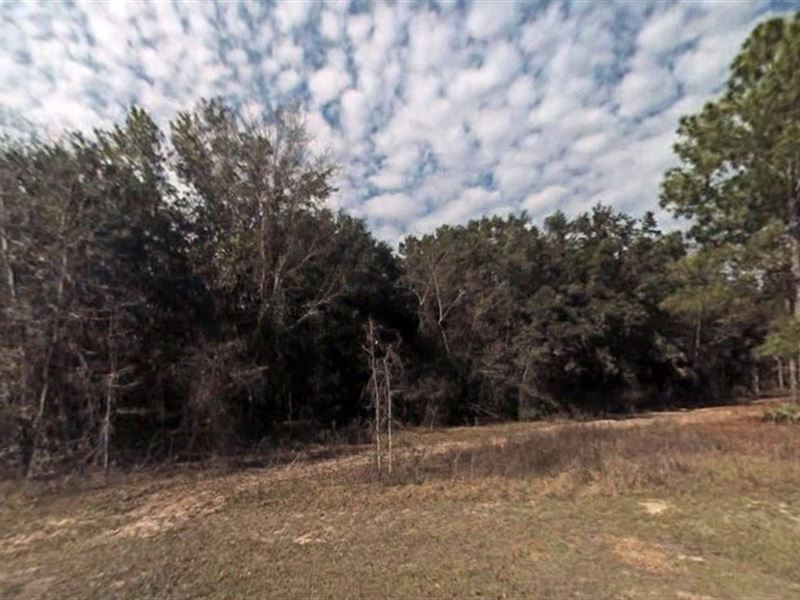 .2 Acre In Summerfield, Fl : Summerfield : Marion County : Florida