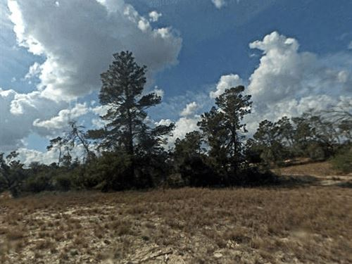 Affordable Lot 0.32 Acre : Lake Placid : Highlands County : Florida