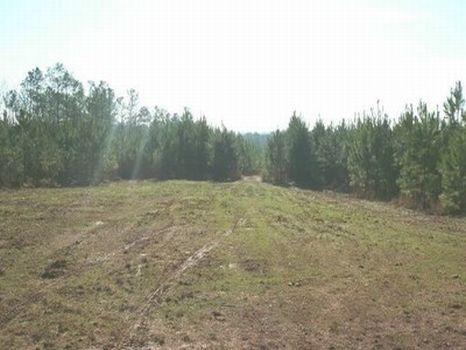 4 Acre Minifarm/Homesite - Lot 8 : Alexander City : Tallapoosa County : Alabama