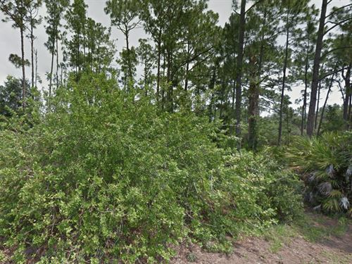 Cheap Land For Sale : Lake Placid : Highlands County : Florida