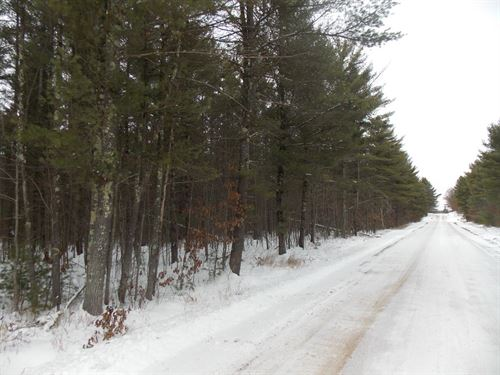 60 Acre Hunting/Building Property : Humbird : Clark County : Wisconsin