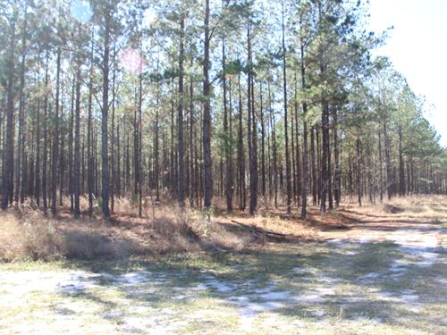 Parcel 7 Oak Creek 12 Acres : Starke : Bradford County : Florida