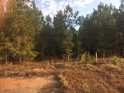 Bay Branch Homesite : Sylvania : Screven County : Georgia