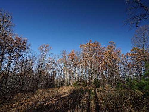 Tr 410 - 40 Acres : New Matamoras : Washington County : Ohio