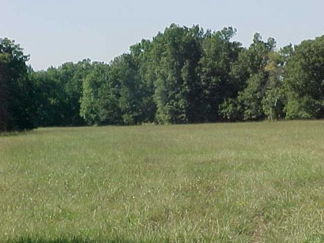 5 Acre Minifarm/Homesite - Lot 9 : Alexander City : Tallapoosa County : Alabama